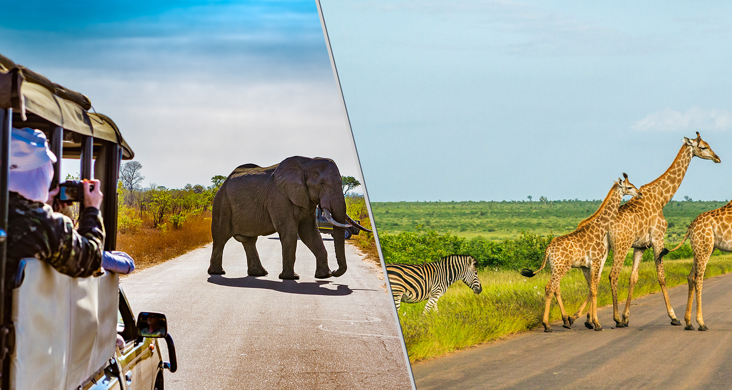 safari-africa-do-sul