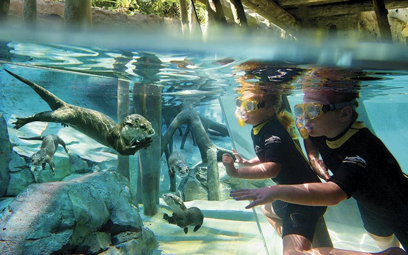Discovery Cove lontra